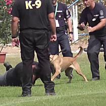Hű társak a rendőrség szolgálatában - szon.hu