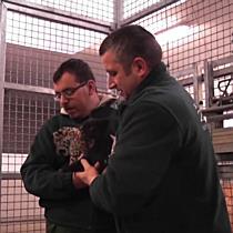 Orvosi vizsgálaton jártak a nyíregyházi jaguár kölykök - szon.hu
